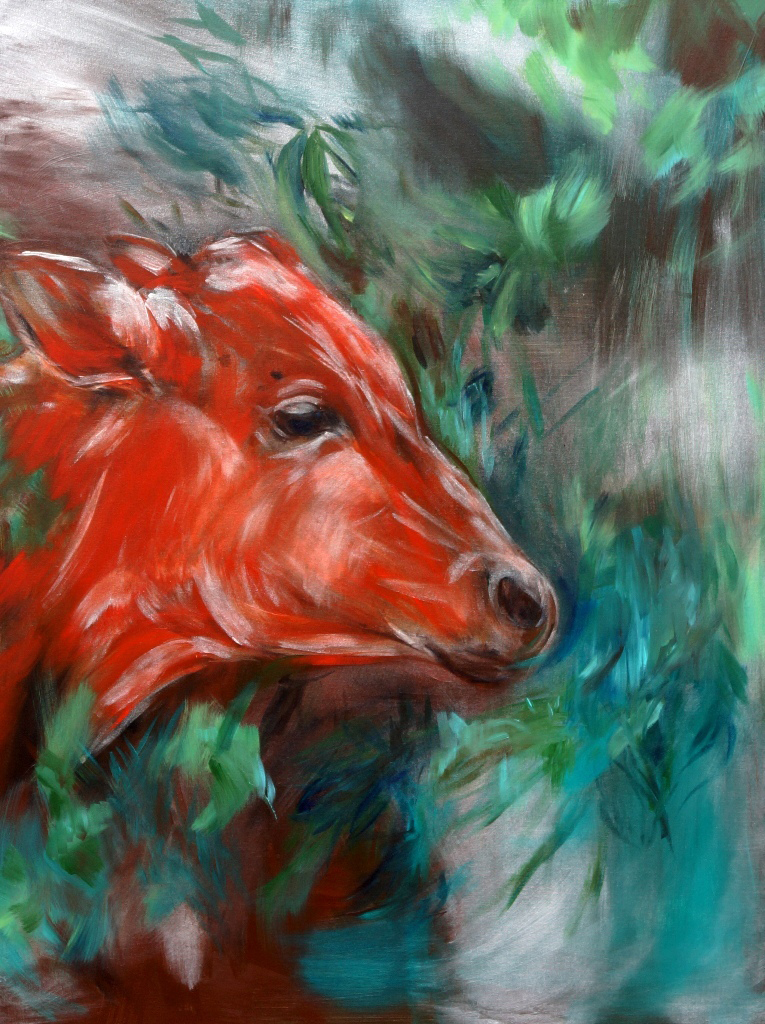 red cow in the Indie